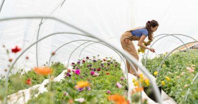 Lån penge til at renovere din have